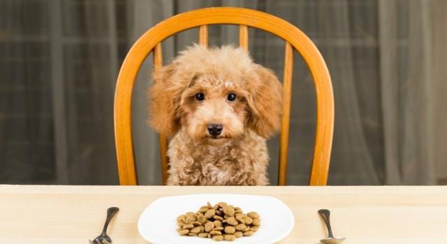 Nourriture canine aux protéines d'insectes : une nouvelle tendance ?