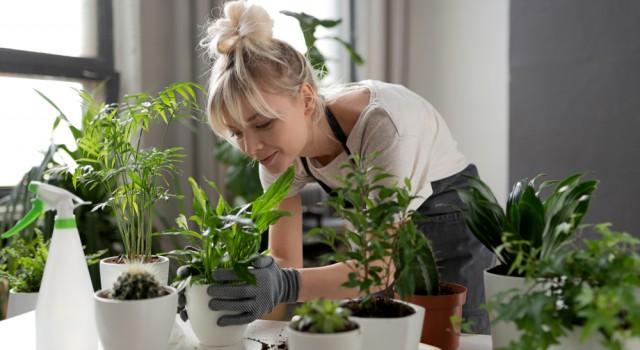 10 plantes médicinales à cultiver chez soi