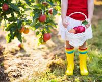 enfant cueillette pommes