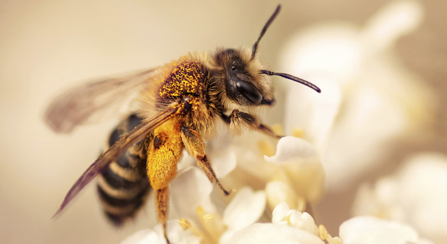 piq res d insectes se soigner par l 39 hom pathie. Black Bedroom Furniture Sets. Home Design Ideas
