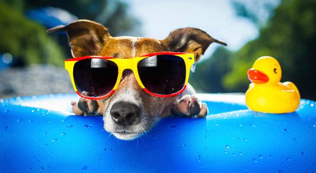 Vacances : votre animal aussi peut prendre des coups de soleil !