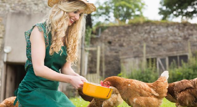 Avoir des poules dans son jardin de multiples avantages - Avoir des poules dans son jardin ...