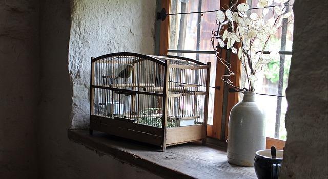 Comment désinfecter naturellement une cage ?
