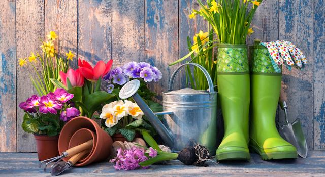 jardinage mois de mai