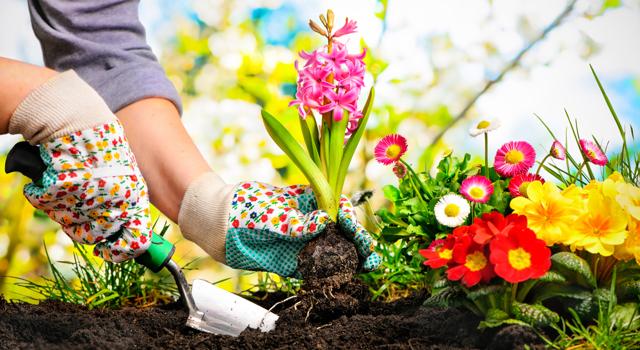 jardiner aout