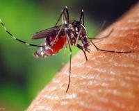 piqûre moustique