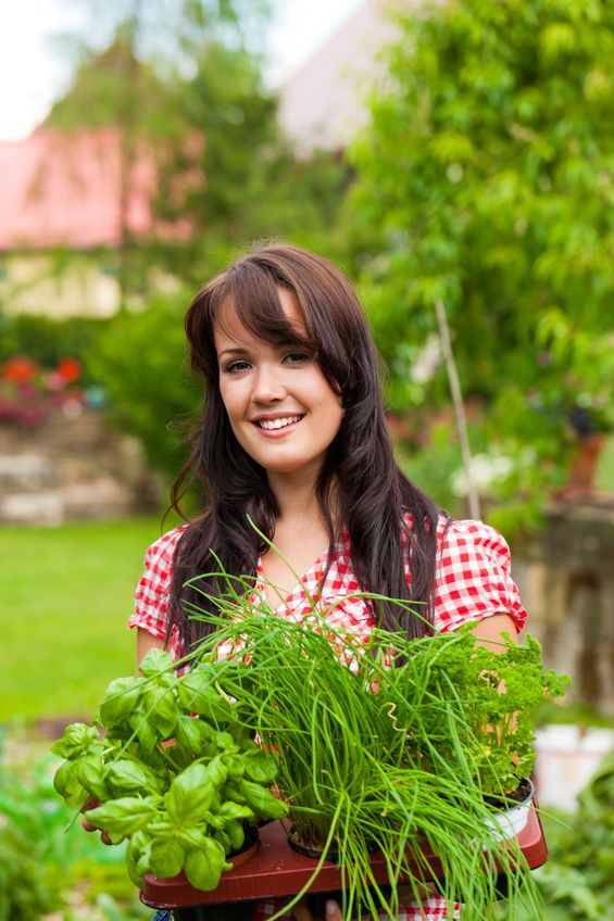 Les plantes aromatiques soulagent les douleurs articulaires et facilitent la digestion