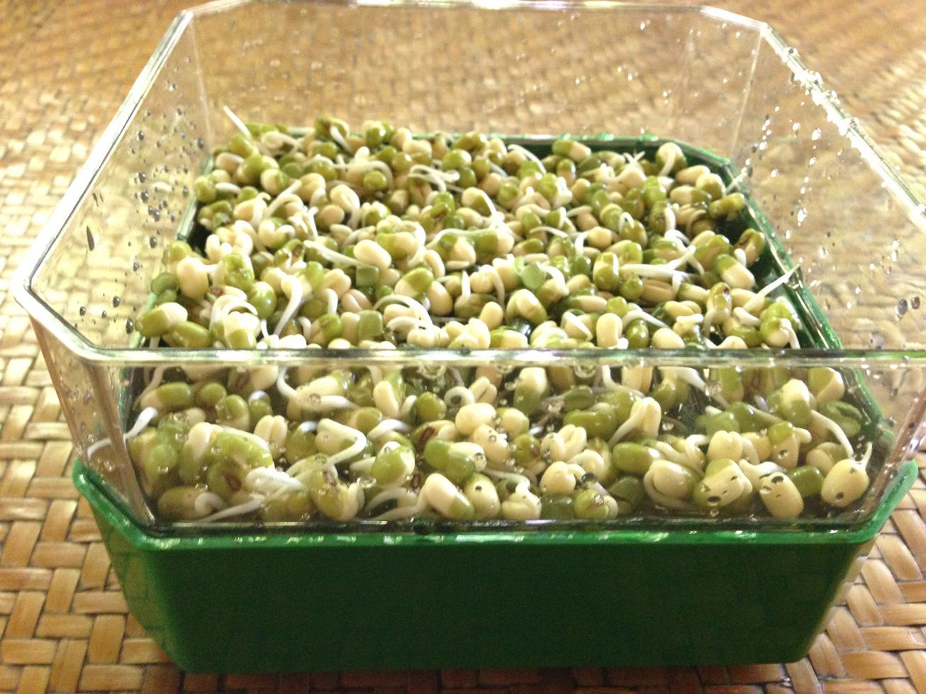 Les graines germées ont de nombreuses vertus que votre organisme appréciera