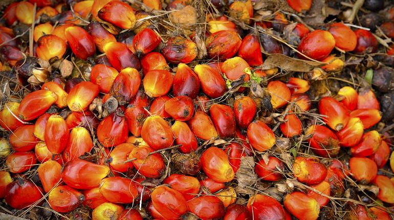 Huile de palme - Un ingrédient très controversé