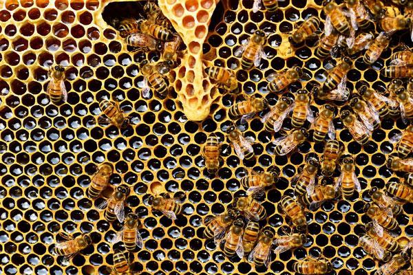 Avec le miel de Manuka, vous apporterez à votre corps des enzymes essentielles pour lutter contre les bactéries et renforcer votre système immunitaire.