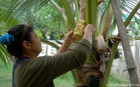 Les vertus du sucre de coco