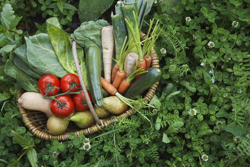 Panier de fruits et légumes idéal pour une cure detox