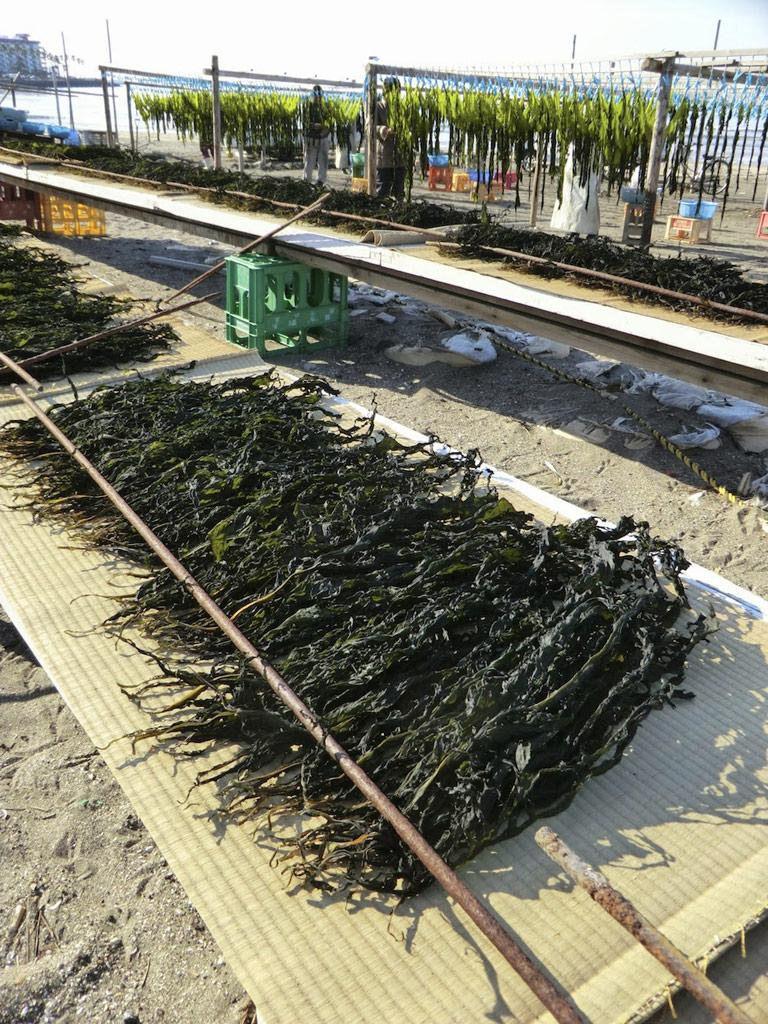 Comme toutes les algues marines, le wakamé est riche en anti-oxydants, vitamines, oligo-éléments, protéines, oméga3